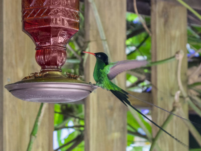 hummingbird_travel_photo