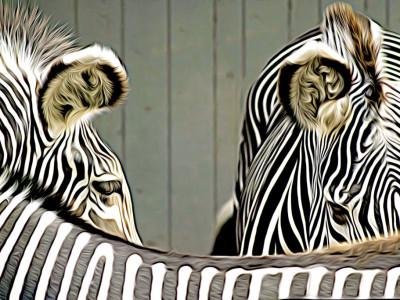 zebra_fixed_photo
